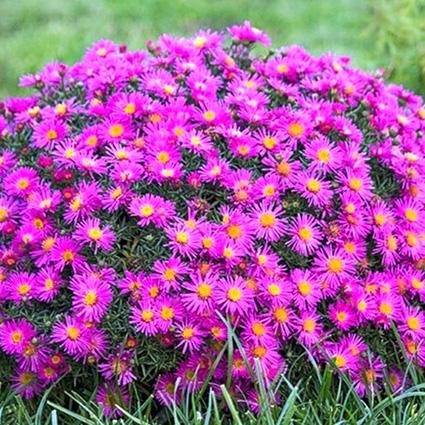 Выращивание однолетних и многолетних цветов 151