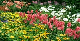 Всесезонний квітник – дивовижна окраса Вашого саду