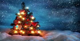 Праздники приближаются! Успейте выбрать елку!