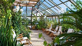 Зимові сади