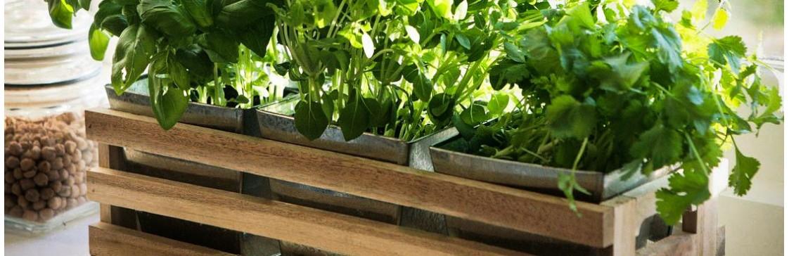 Новинка: ароматная зелень на подоконнике - круглый год!