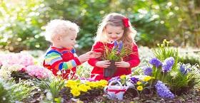 Осень - лучшее время для разбивки и посадки Вашего цветника