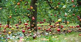 6 приемов для стимулирования роста ослабленного дерева!