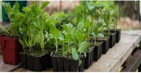 Когда сажать семена на рассаду?