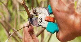 Обрезка деревьев: ТОП полезных советов от «КрасаваДар»