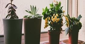 5 лучших удобрений для домашних растений