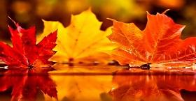 ТОП 5 невибагливих дерев та кущів, що зроблять ваш сад неймовірним восени