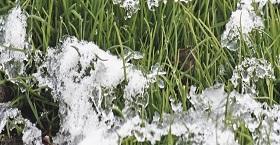 Уход за газоном весной