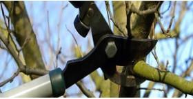 Предлагаем услугу - Обрезка деревьев и кустарников