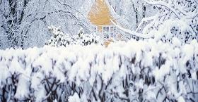 Январь не за горами. Зимние работы в саду.