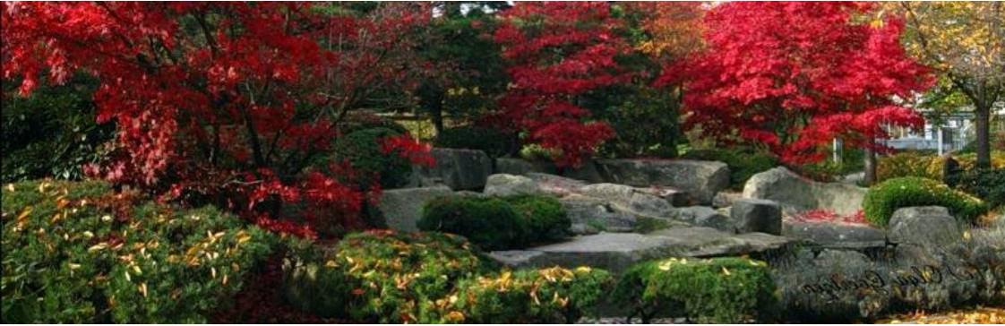 ТОП 5 неприхотливых кустов, которые сделают ваш сад невероятным