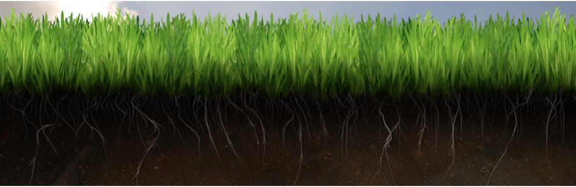 Микроорганизмы в почвах: их роль и значение