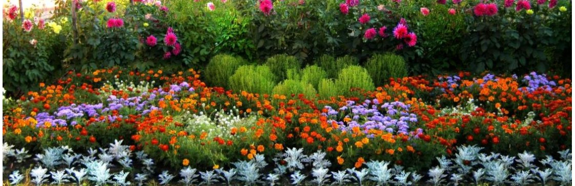 Які квіти цвітуть влітку?