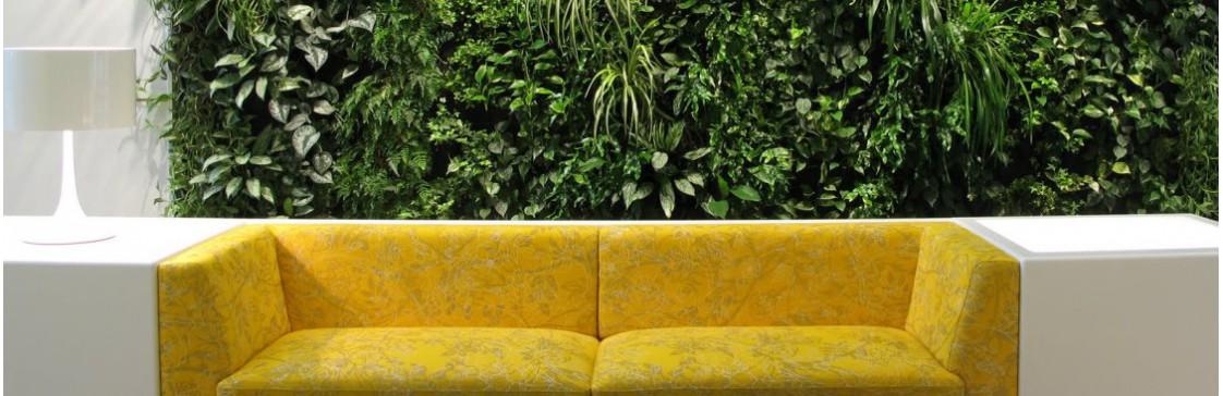 Фитостена - вертикальное озеленение у вас в помещениях