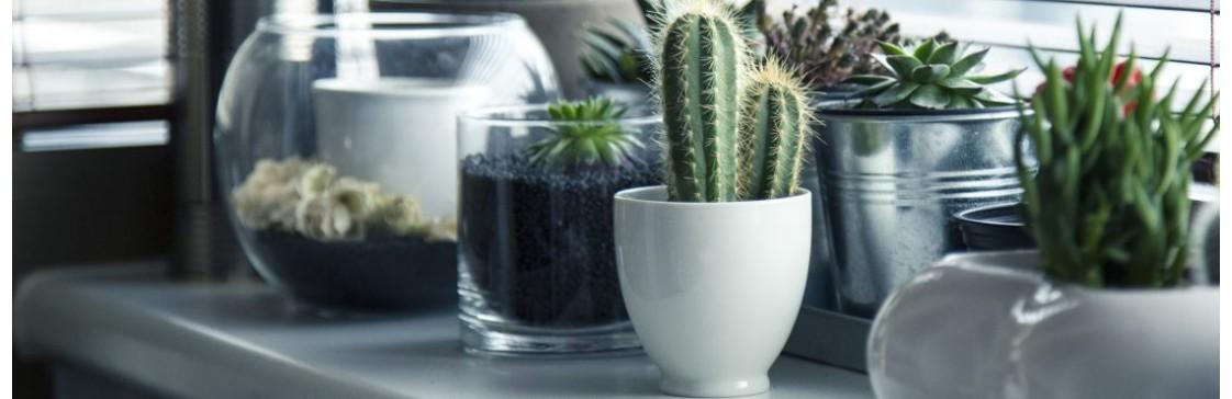 5 найкращих добрив для домашніх рослин
