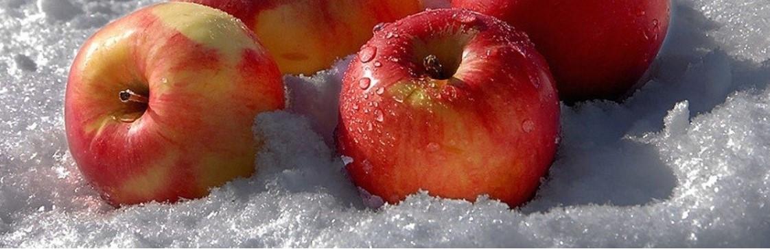 Как защитить растения от заморозков?