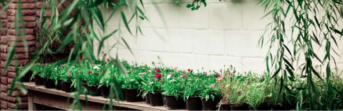 Оформлення зимового саду Вашої мрії!