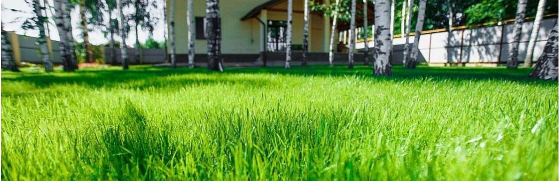 Як доглядати за газоном влітку? Секрети підживлення