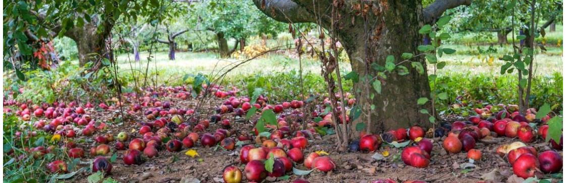 ТОП - 9 садовых работ в сентябре